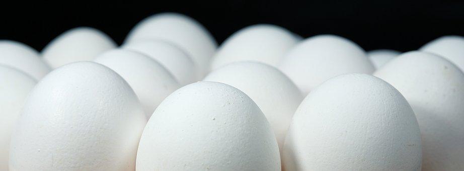 egg-2233677__340